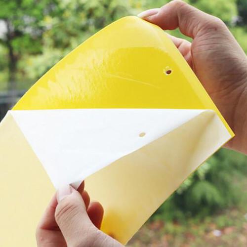 fly glue board